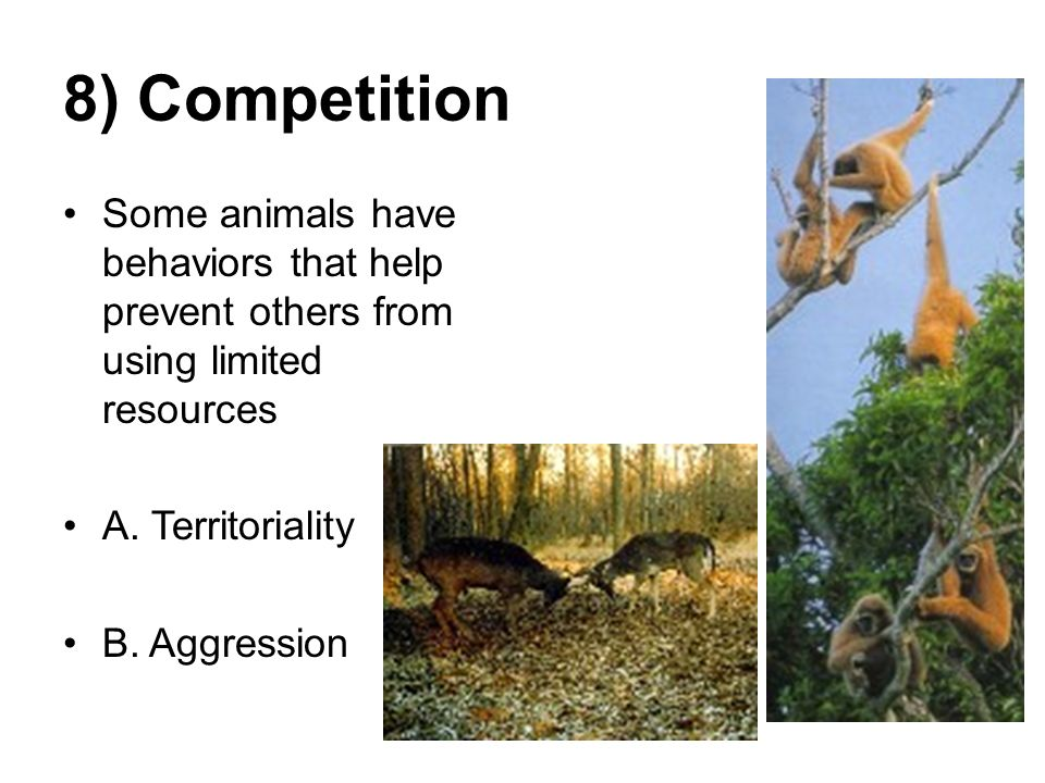 Chapter 34 Animal Behavior - ppt video online download