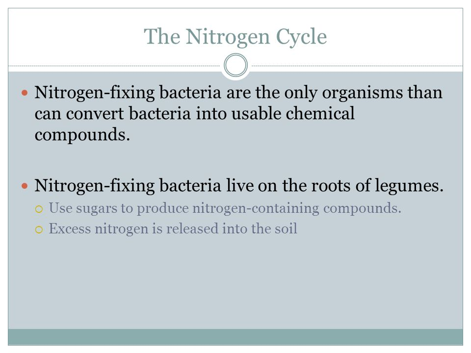 The Nitrogen Cycle Nitrogen-fixing bacteria are the only organisms than can convert bacteria into usable chemical compounds.