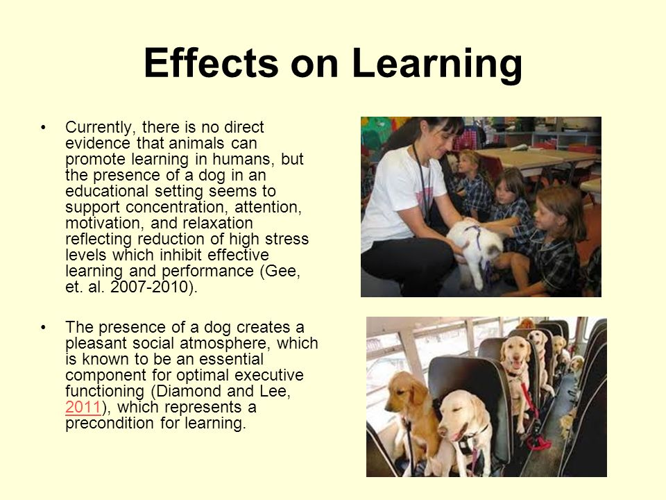 effects of animal ownership on stress The human-animal bond is a mutually beneficial and dynamic relationship  a  therapy dog has a positive effect on patients' pain level and satisfaction with their   benefits extend to our companion animals and the presence of pets in our lives :  support, lowers blood pressure response to mental stress (allen, 2001) [7]  pet.