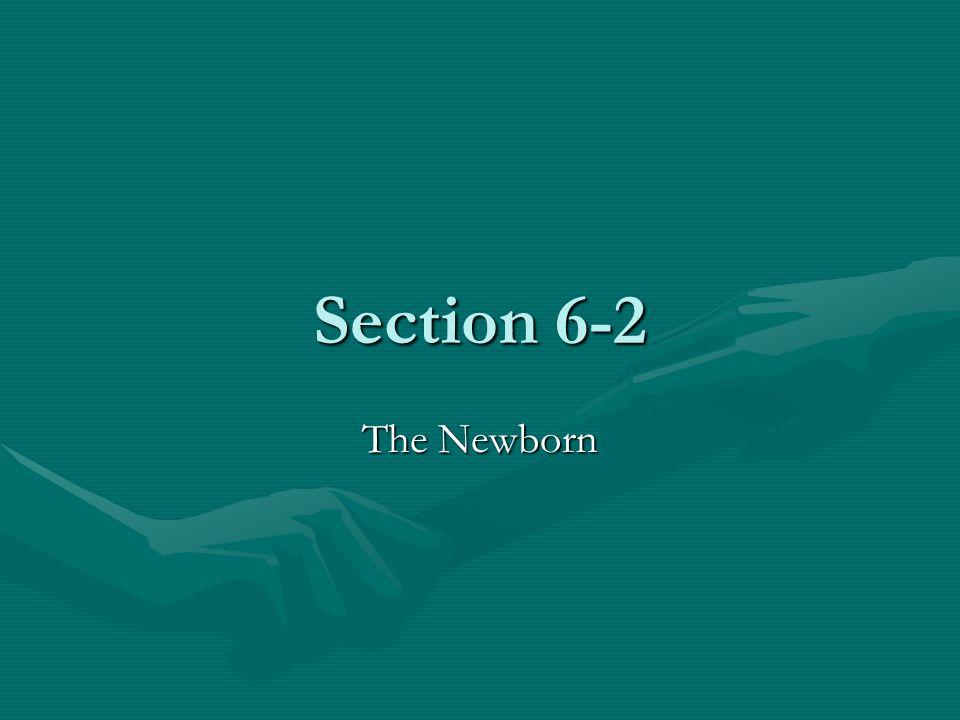 Section 6-2 The Newborn