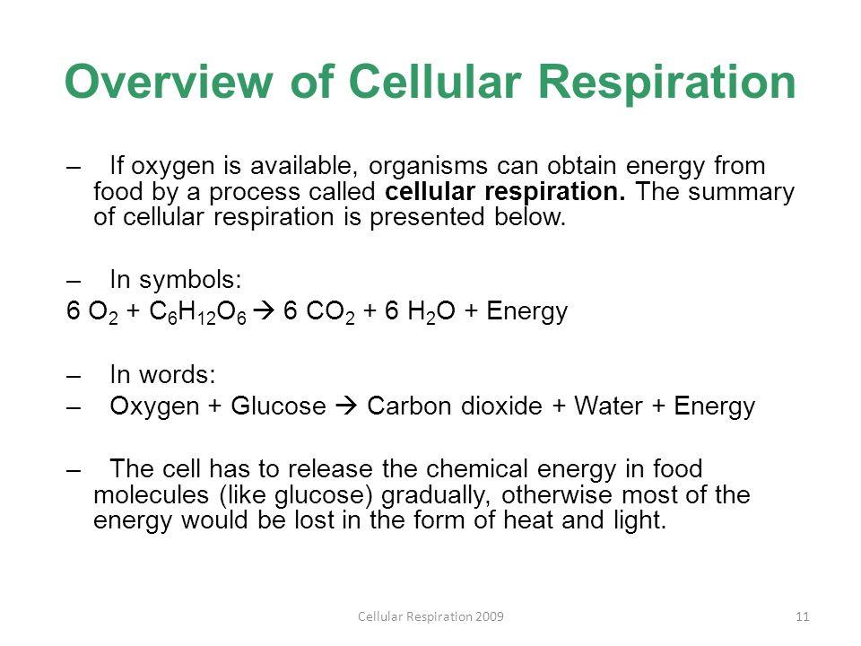 Chapter 9: Cellular Respiration and Fermentation - ppt download