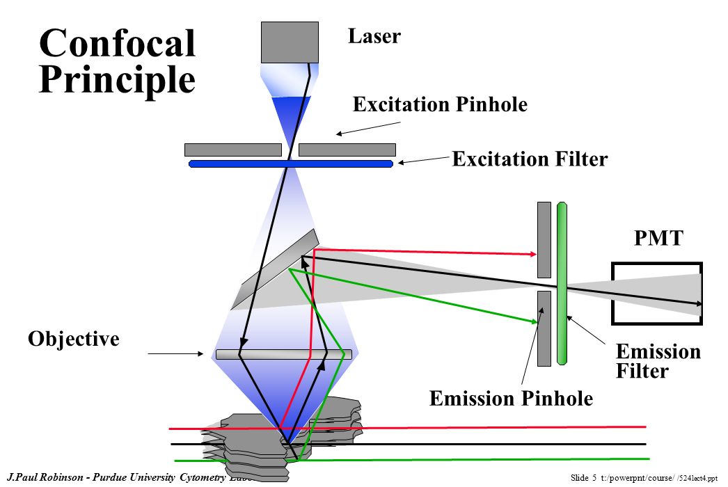 Lecture 4 The Principles Of Confocal Microscopy