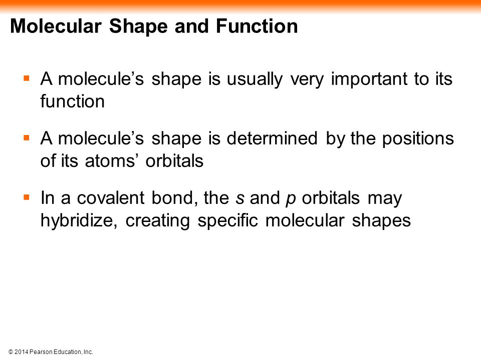 Molecular Shape and Function