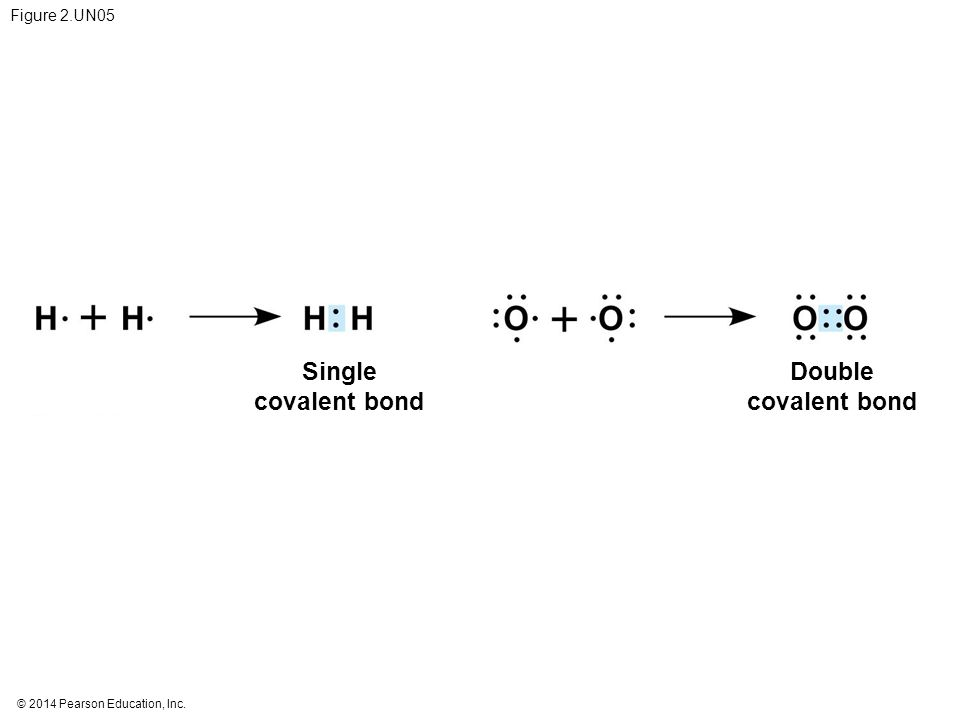 Single covalent bond Double covalent bond