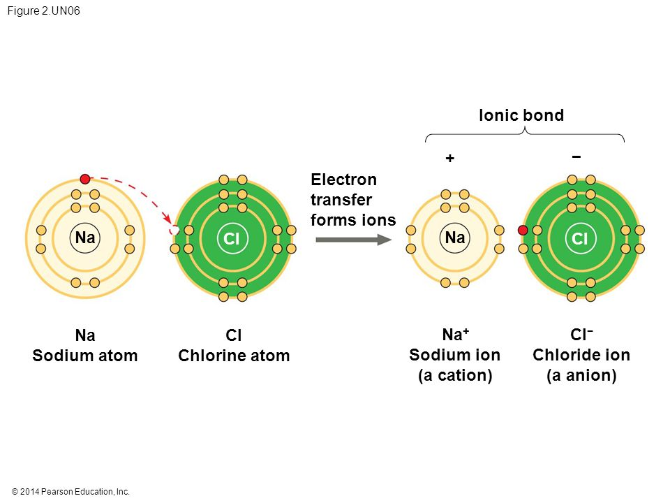 Ionic bond + − Electron transfer forms ions Na Cl Na Cl Na Sodium atom