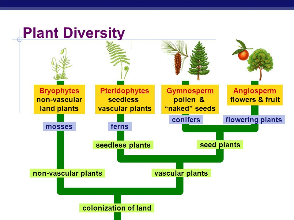 a discussion of the diverse plant kingdom To learn the evolutionary relationships of the major plant groups • to practice   they may retain them for the next lesson for the discussion with the whole class.