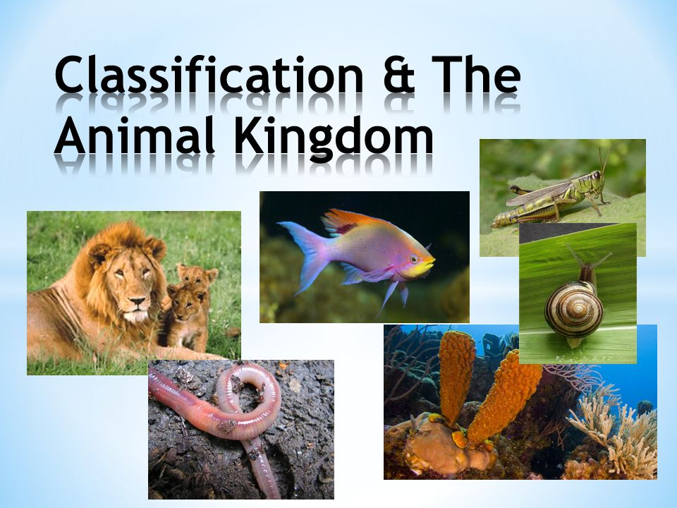 Image result for the animal kingdom