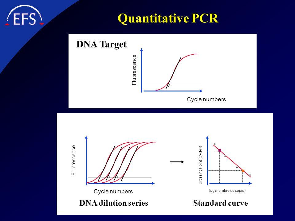 Quantitative PCR DNA Target DNA dilution series Standard curve