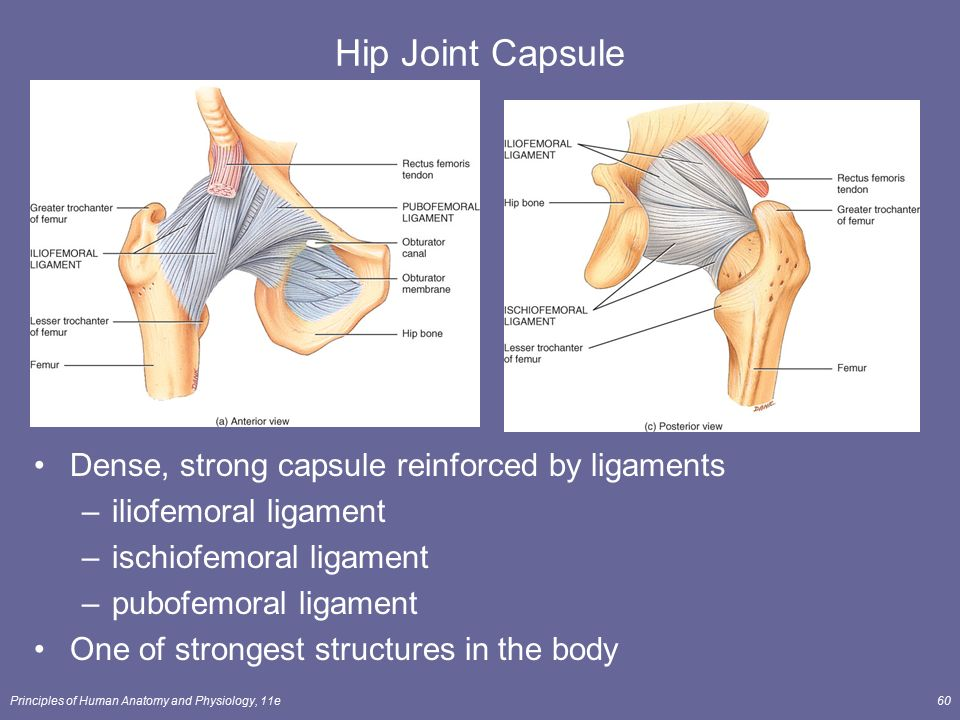 Joints Lecture Outline - ppt video online download