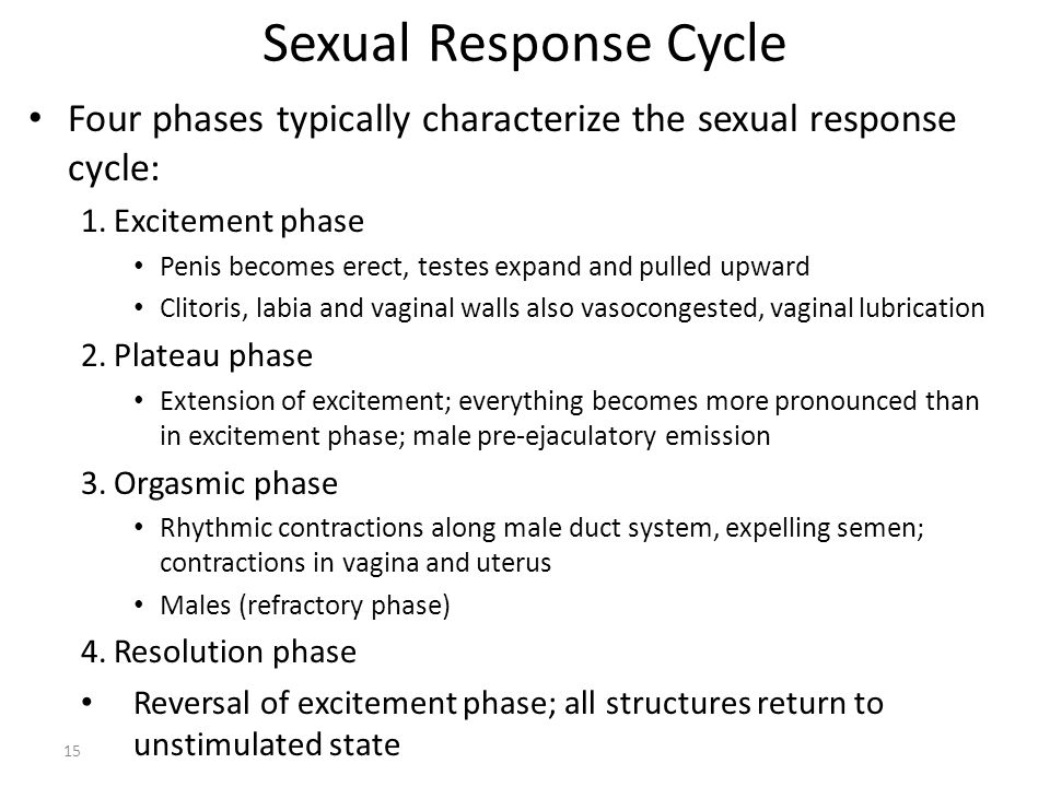 Sexual Response Cycle Four phases typically characterize the sexual response cycle: Excitement phase.