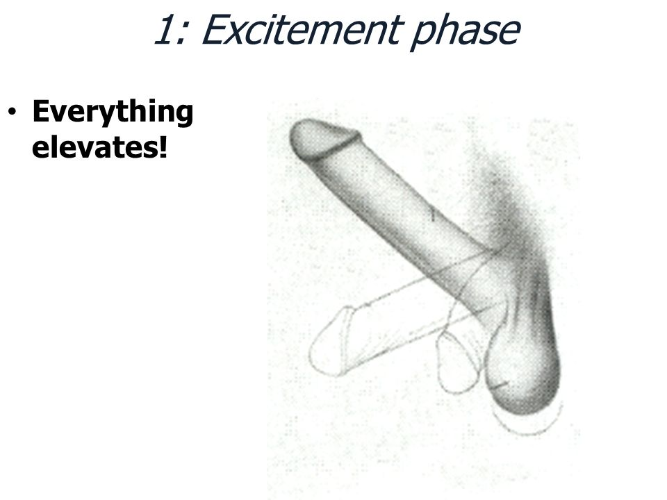 1: Excitement phase Everything elevates!