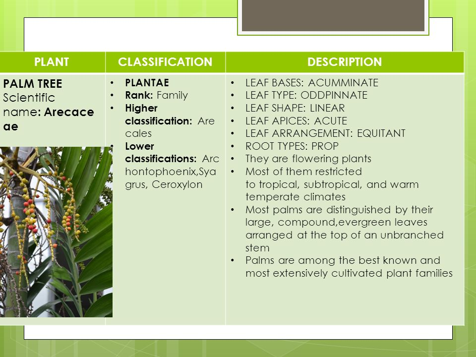 Cultivated plant taxonomy