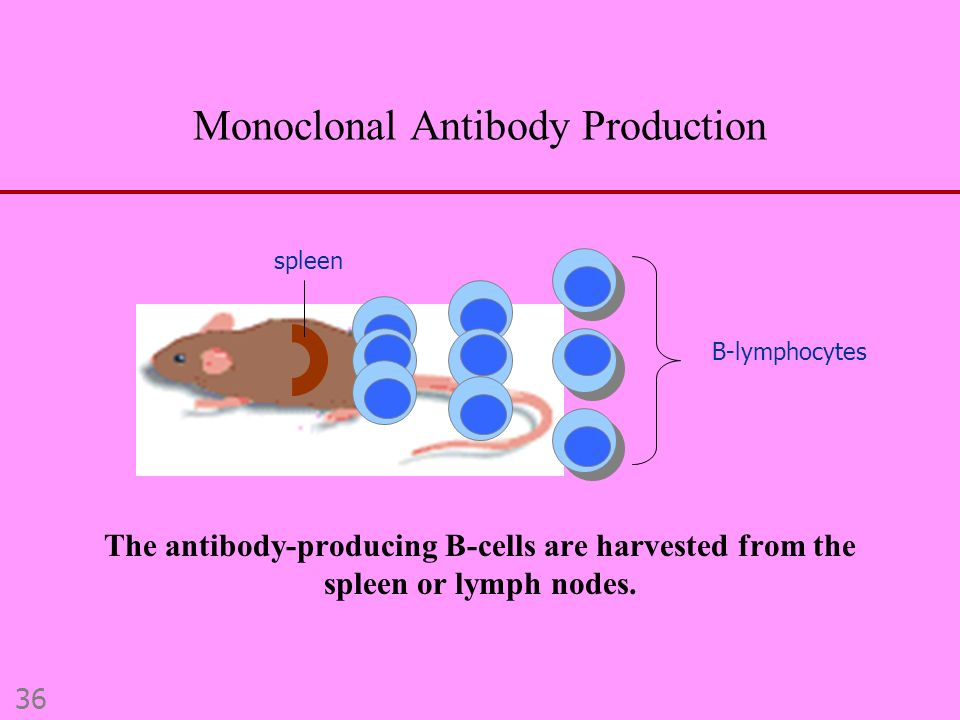 ANTIBODY STRUCTURE AND FUNCTION - ppt video online download