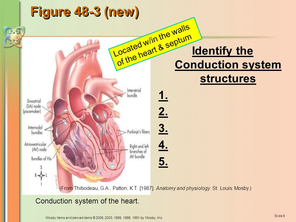Care of the Patient with a Cardiovascular or a Peripheral - ppt download