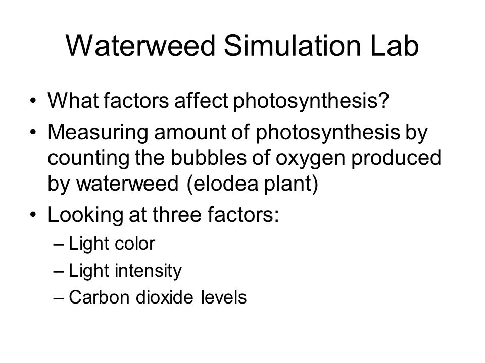 Waterweed Simulation Lab