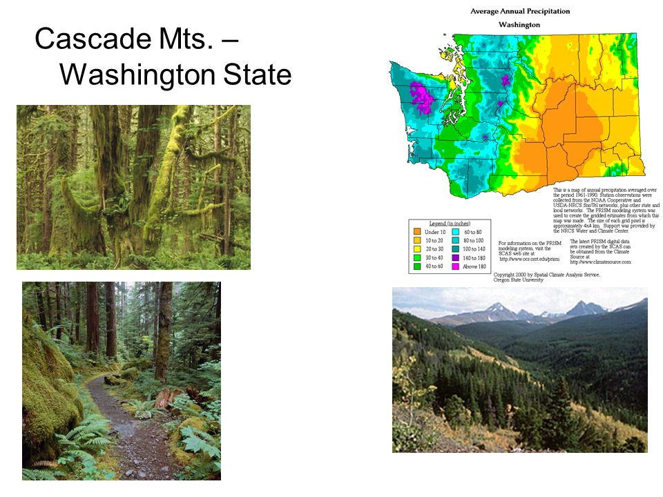 Cascade Mts. – Washington State
