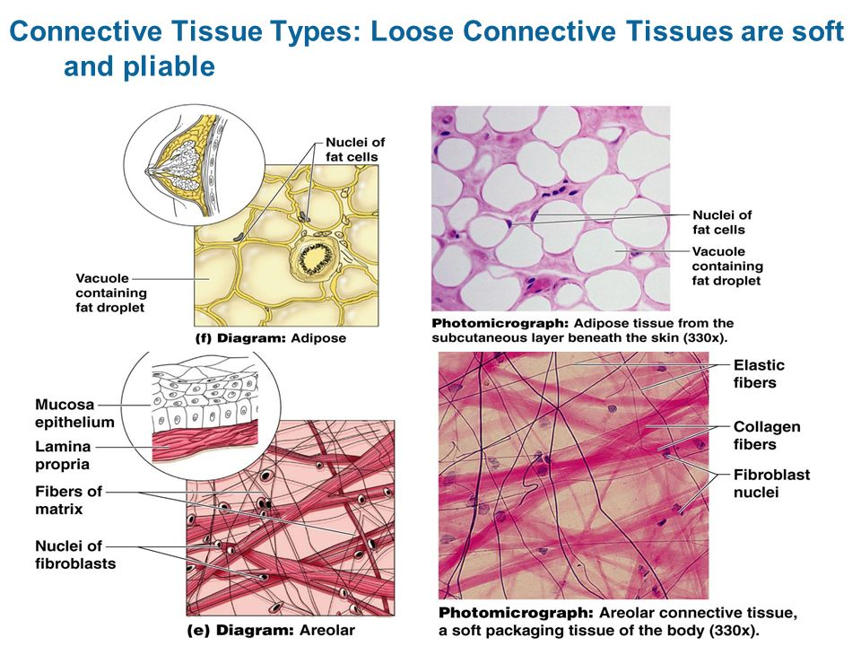 cells and tissues cells building blocks of all life