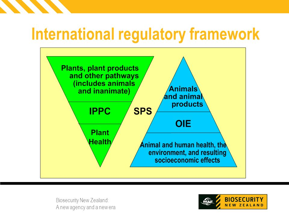 International regulatory framework
