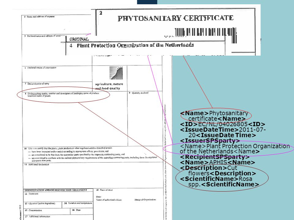 <Name>Phytosanitary certificate<Name>