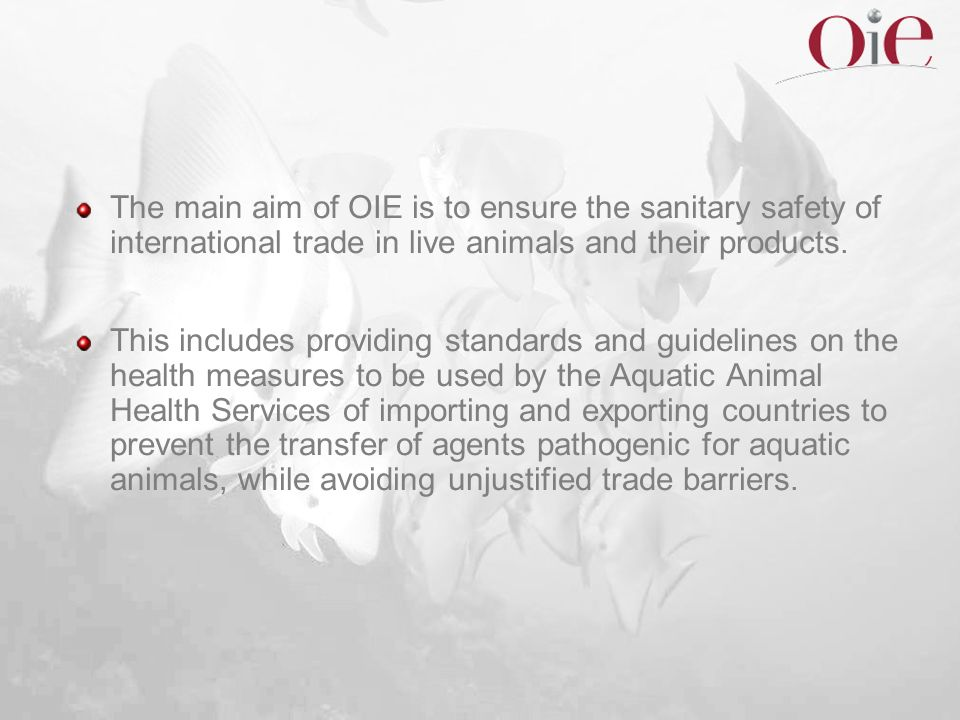 The main aim of OIE is to ensure the sanitary safety of international trade in live animals and their products.