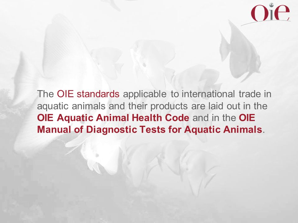 The OIE standards applicable to international trade in aquatic animals and their products are laid out in the OIE Aquatic Animal Health Code and in the OIE Manual of Diagnostic Tests for Aquatic Animals.