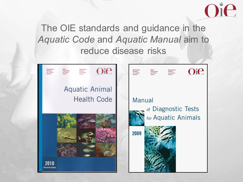The OIE standards and guidance in the Aquatic Code and Aquatic Manual aim to reduce disease risks