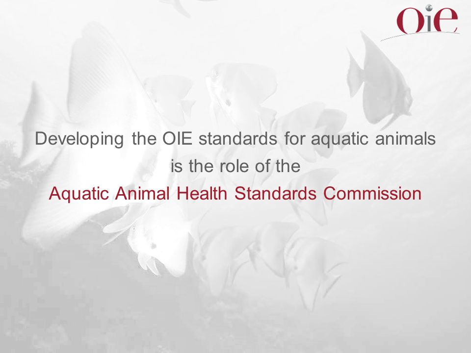 Developing the OIE standards for aquatic animals is the role of the Aquatic Animal Health Standards Commission