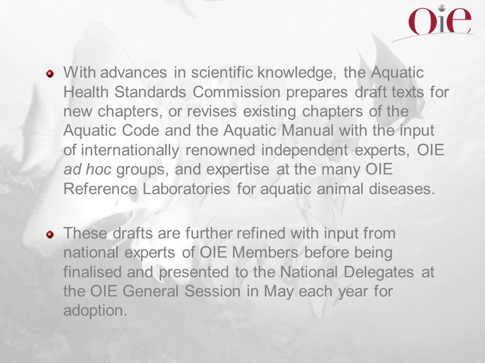 With advances in scientific knowledge, the Aquatic Health Standards Commission prepares draft texts for new chapters, or revises existing chapters of the Aquatic Code and the Aquatic Manual with the input of internationally renowned independent experts, OIE ad hoc groups, and expertise at the many OIE Reference Laboratories for aquatic animal diseases.