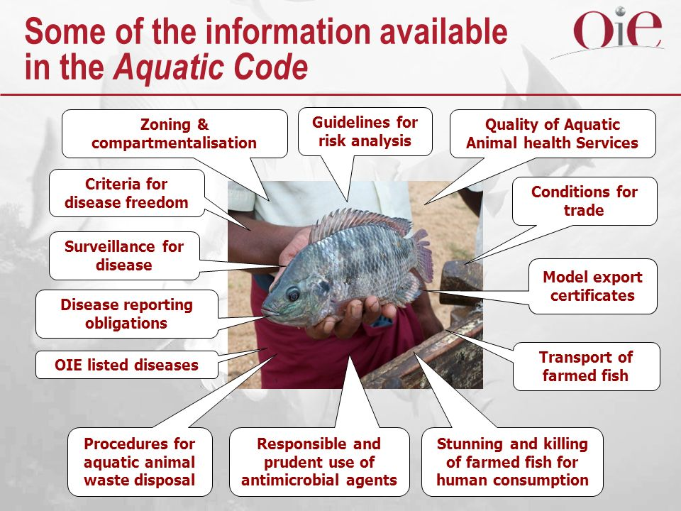 Some of the information available in the Aquatic Code