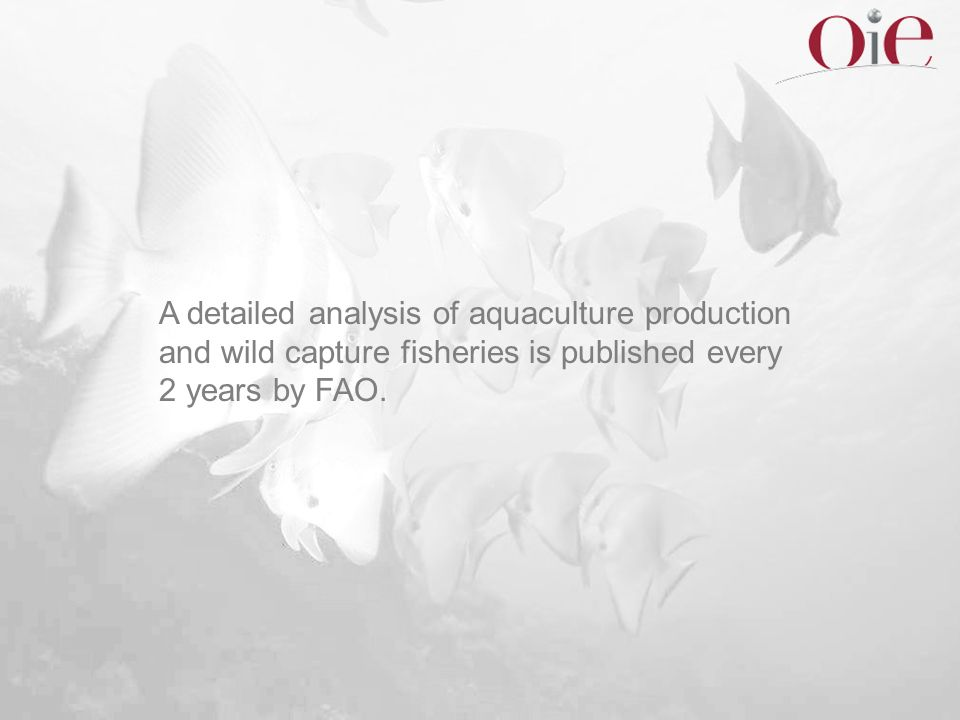 A detailed analysis of aquaculture production and wild capture fisheries is published every 2 years by FAO.