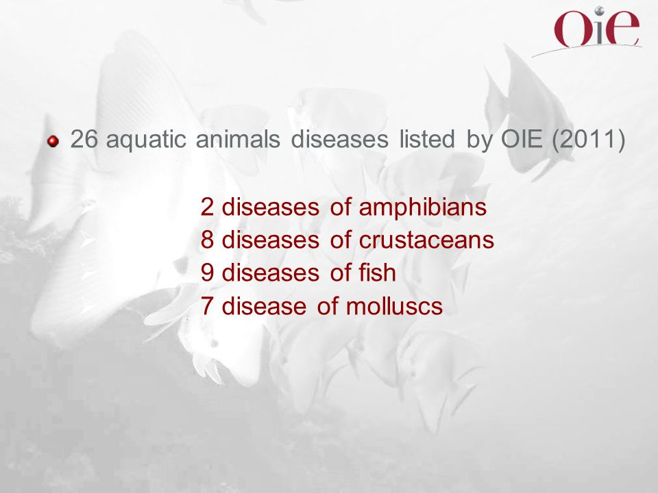26 aquatic animals diseases listed by OIE (2011)