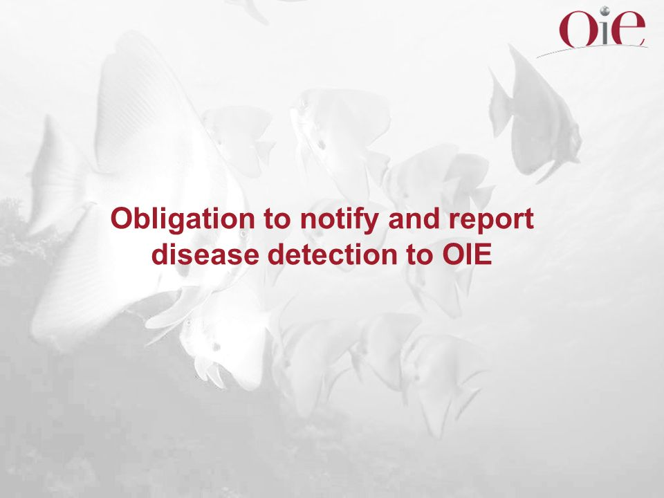 Obligation to notify and report disease detection to OIE