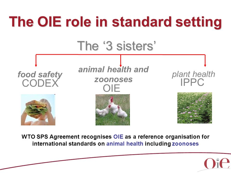 The OIE role in standard setting
