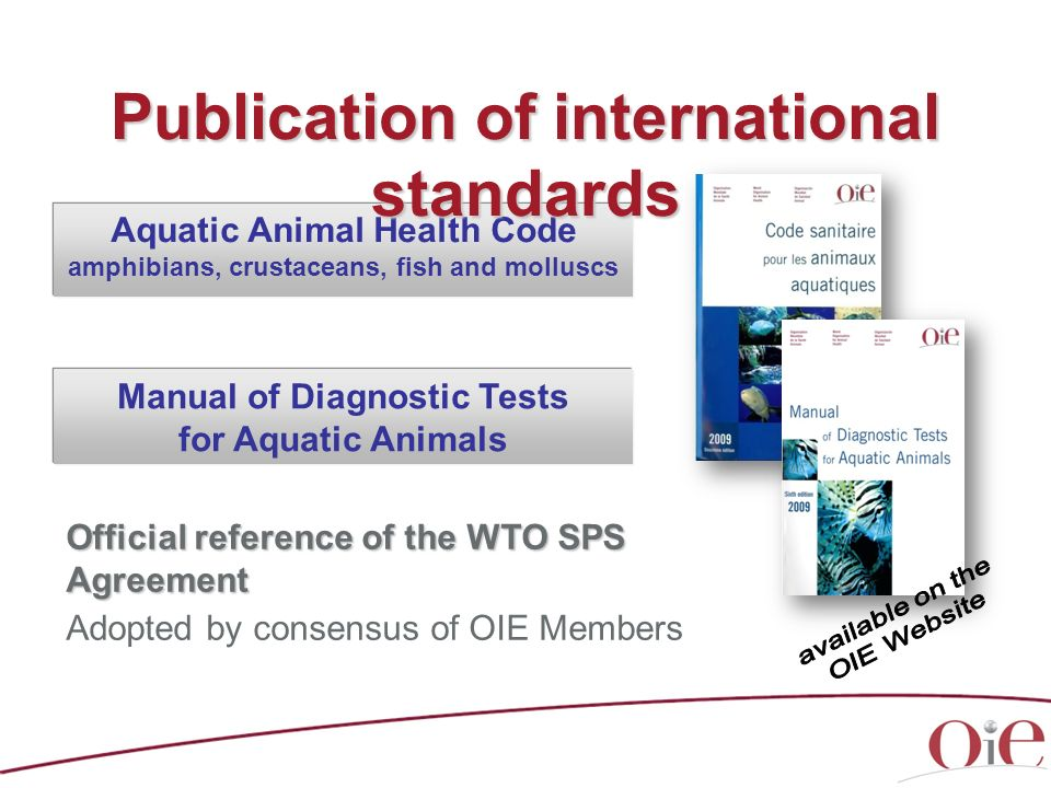 Publication of international standards