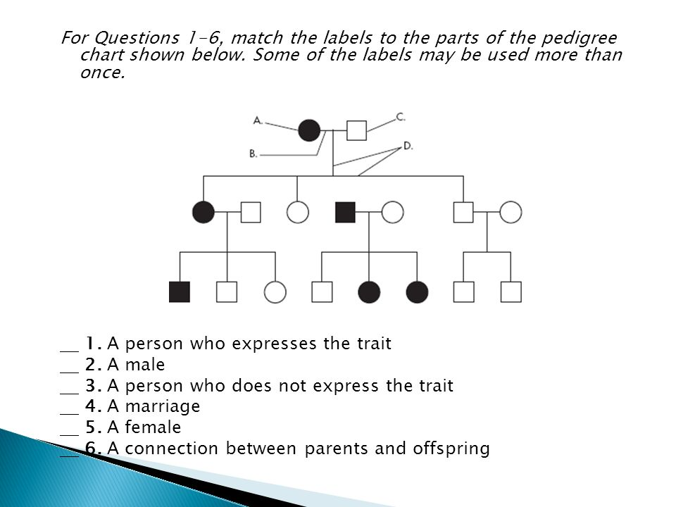 For Questions 1 6 Match The Labels To The Parts Of The Pedigree
