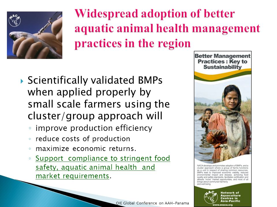Widespread adoption of better aquatic animal health management practices in the region