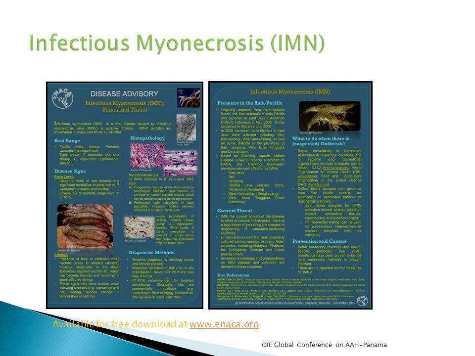 Infectious Myonecrosis (IMN)