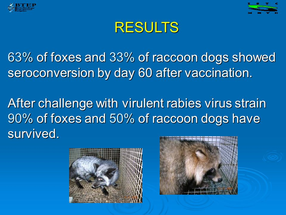 RESULTS 63% of foxes and 33% of raccoon dogs showed seroconversion by day 60 after vaccination.