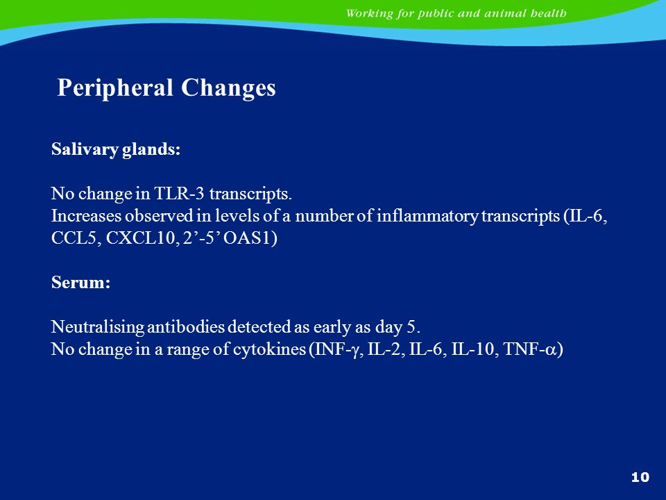 Peripheral Changes Salivary glands: No change in TLR-3 transcripts.