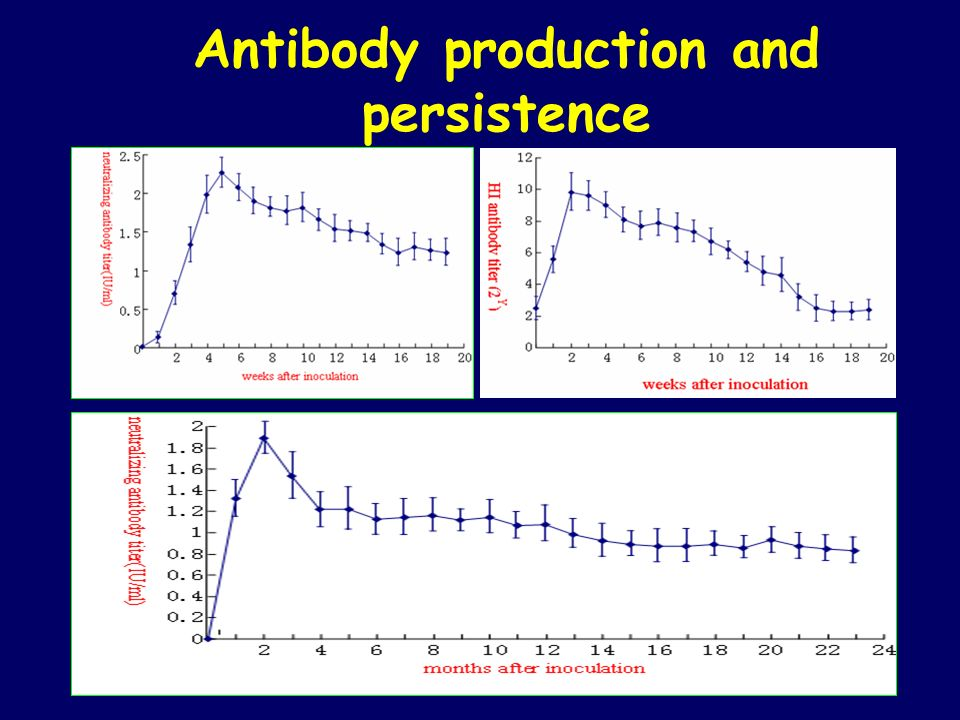 Antibody production and persistence