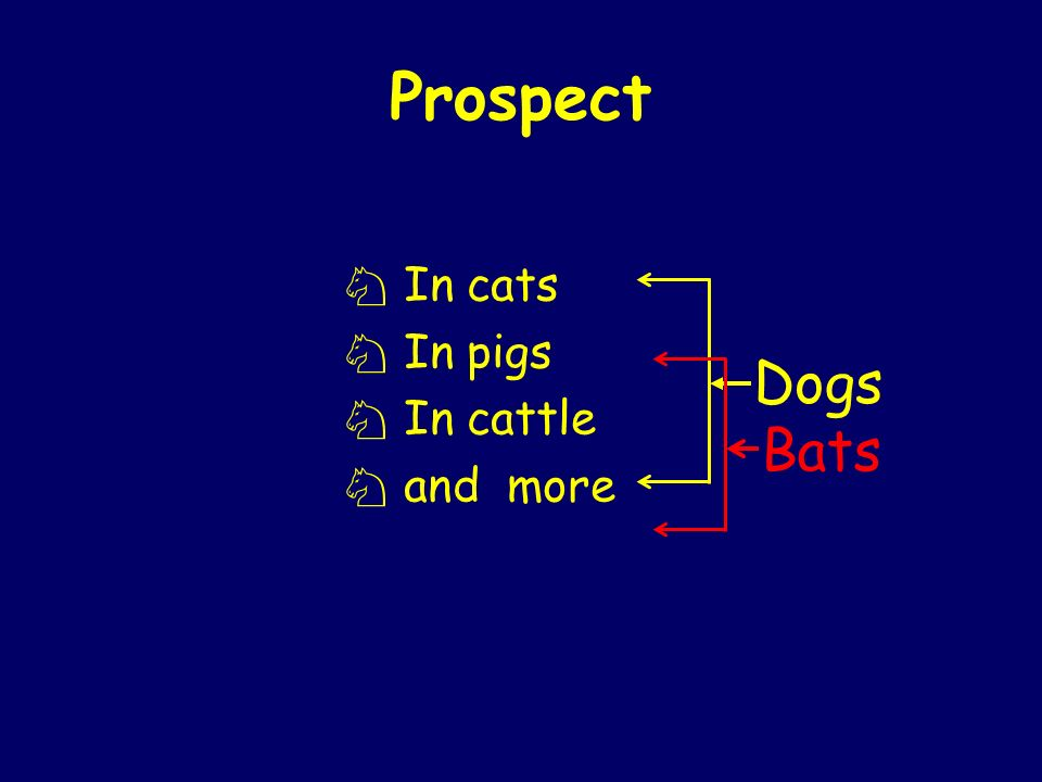 Prospect In cats In pigs In cattle and more Dogs Bats
