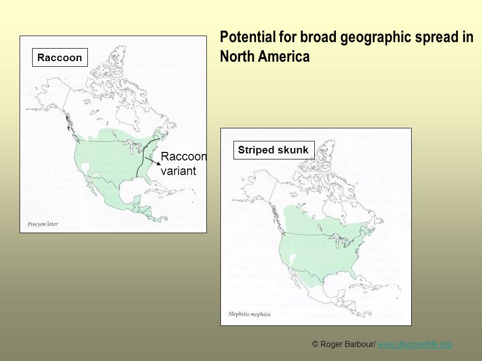 Potential for broad geographic spread in North America