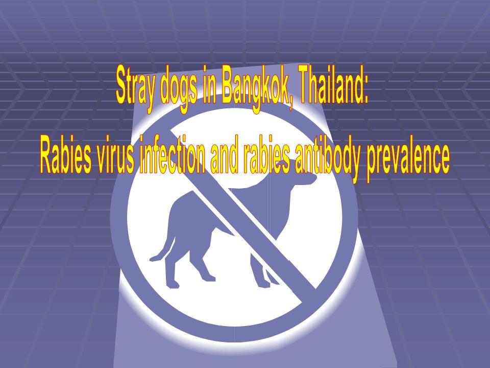 Stray dogs in Bangkok, Thailand: