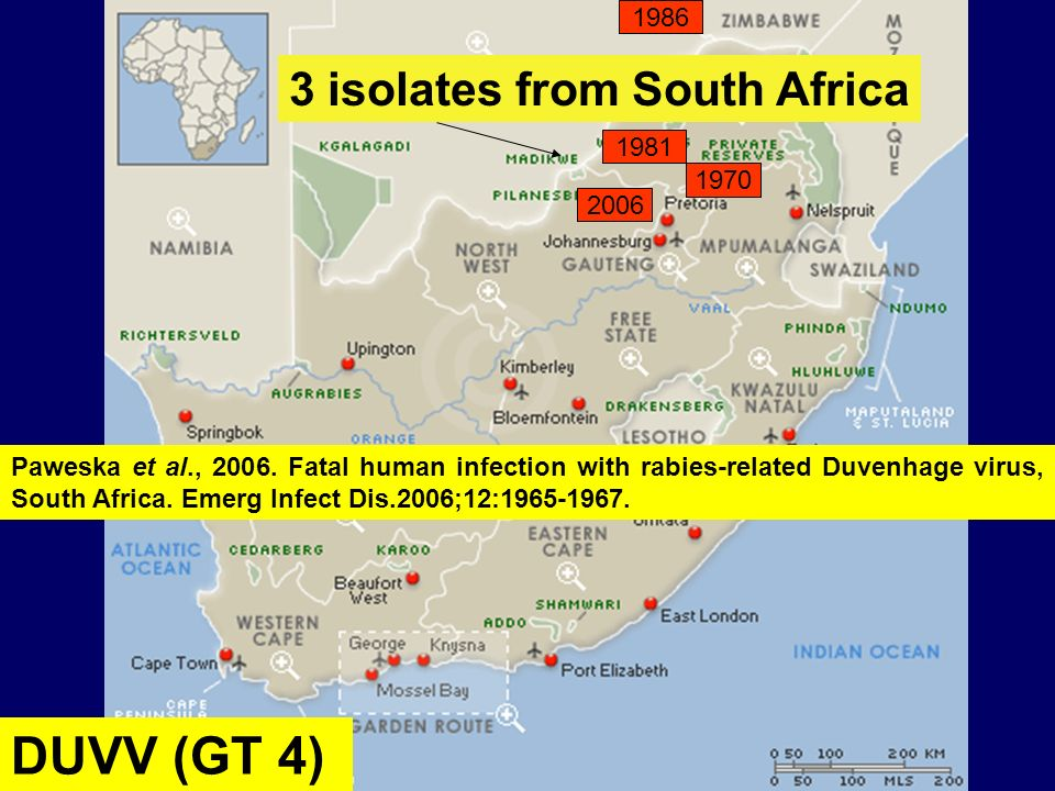 DUVV (GT 4) 3 isolates from South Africa 1986 1981 1970 2006