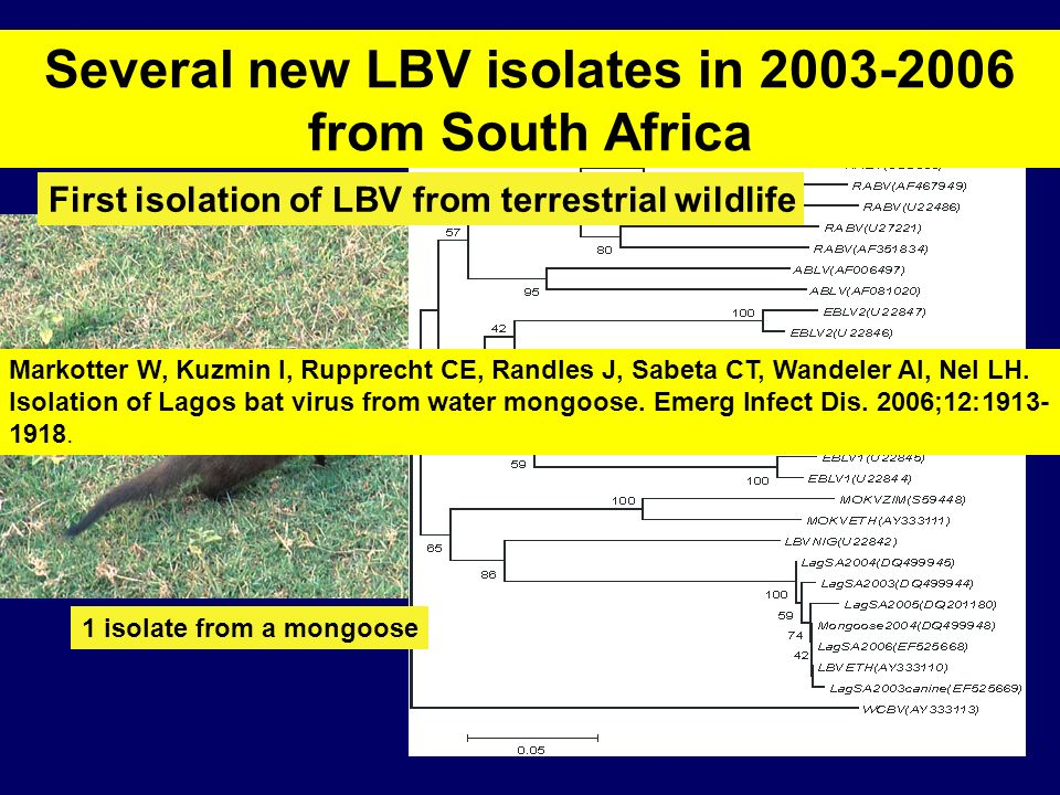 Several new LBV isolates in 2003-2006 from South Africa
