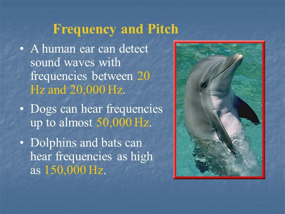 Frequency and Pitch A human ear can detect sound waves with frequencies between 20 Hz and 20,000 Hz.