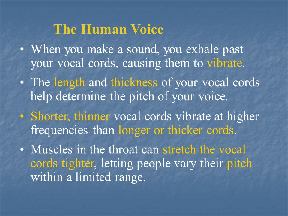 The Human Voice When you make a sound, you exhale past your vocal cords, causing them to vibrate.