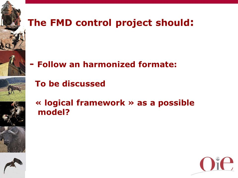 The FMD control project should: