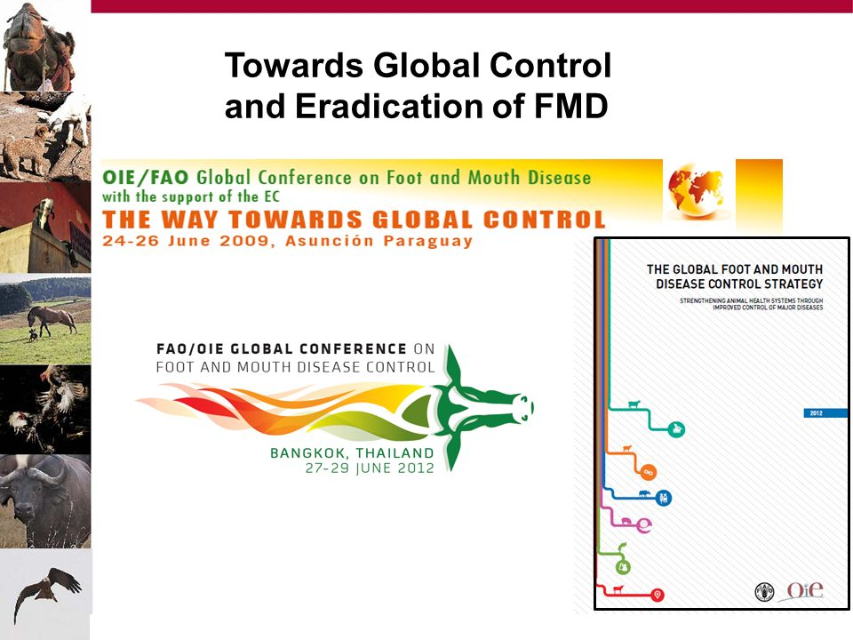 Towards Global Control and Eradication of FMD