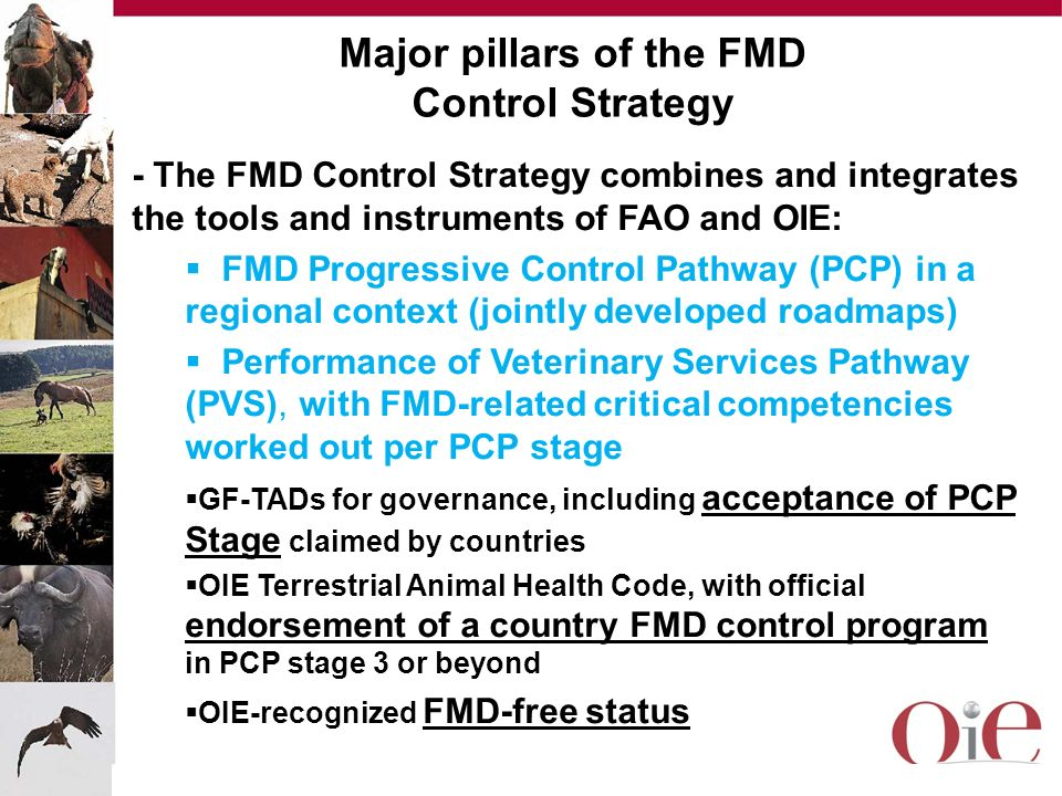 Major pillars of the FMD Control Strategy